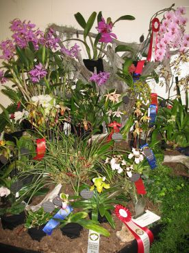 Orchid shows